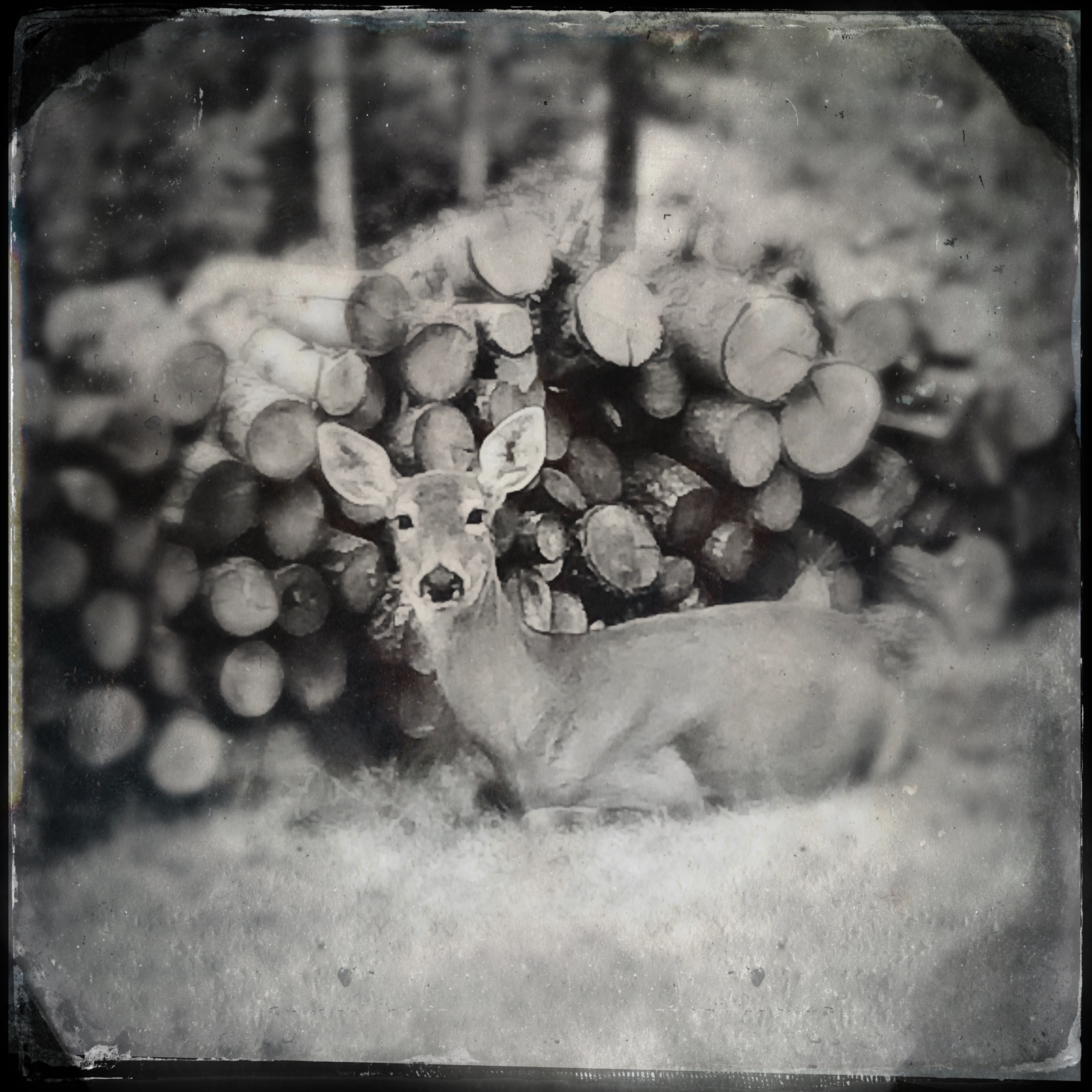 My-TinType-by-Hipstamatic-8